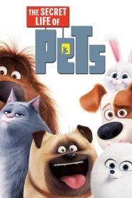 เรื่องลับแก๊งขนฟู The Secret Life of Pets (2016)