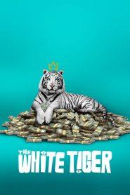 พยัคฆ์ขาวรำพัน The White Tiger (2021)