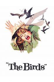 นก นก นก The Birds (1963)